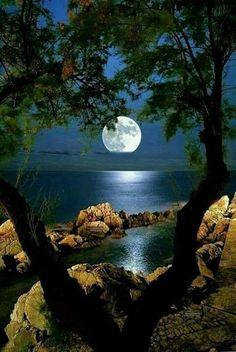 Moonlight thru the trees Beautiful Nature Pictures, Beautiful Nature Wallpaper, Beautiful Moon, Nature Photos, Amazing Nature, Beautiful Landscapes, Cool Pictures, Moon Photography, Landscape Photography