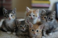 The Darlings by *lalalaurie, via Flickr