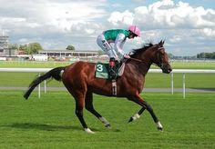 Les chevaux de sports - Frankel - Frankel au départ des International Stakes à York en 2012