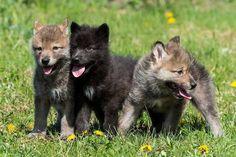 A trio of cuties.