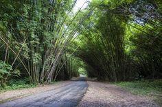 Chaguaramas Trinidad | Photograph Bamboo Cathedral, Chaguaramas, Trinidad and Tobago. by ...