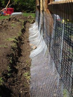 Backyard Chicken Coops, Diy Chicken Coop, Chickens Backyard, Chicken Wire Fence, Backyard Ideas, Chicken Coop Designs, Backyard Farming, Inside Chicken Coop, Chicken Coop Pallets