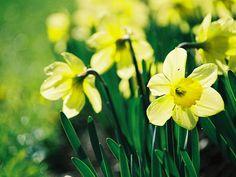 Astăzi, duminica de Florii. Duminica bucuroasă a intrării lui Iisus în Ierusalim - Mediafax