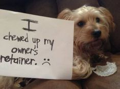 Believe it or not we get phone calls all the time about this  Keep it in a protective case and up high  #Dog #Pets #Puppy #Retainer #Ashamed #PetShame #OhFido #Haha #Dentist #Dental #Dentistry
