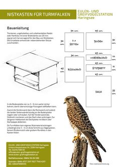 Nesting boxes for owls and birds of prey: owl . - Nesting boxes for owls and birds of prey: Owl and bird of prey station Haringsee - Garden Types, Bird House Feeder, Bird Feeders, Birdhouse Designs, Garden Animals, Bird Boxes, Chicken Runs, Garden In The Woods, Nesting Boxes