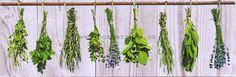 Bylinky (4) Asparagus, Vegetables, Studs, Vegetable Recipes, Veggies