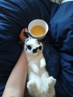 Oliver, my rabbit!!!