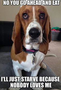 Basset Hound: Does anyone out there remember Flash the dog from Dukes of Hazard?