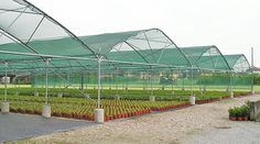 Tunnel Greenhouse, Greenhouse Farming, Greenhouse Vegetables, Farm Layout, Veg Garden, Smart City, Permaculture, Agriculture, Solar