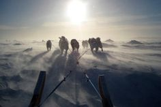 Genetic and environmental evidence indicates that after the ancestors of Native Americans left Asia, they spent 10,000 years in shrubby lowlands on a broad land bridge that once linked Siberia and Alaska. Archaeological evidence is lacking because it drowned beneath the Bering Sea when sea levels rose.   Canadian Inuit dogs pull a sled using traditional harnesses in February 2010 in Iqaluit, Canada. Inuit people are among the many descendants of the people now believed to have lingered for…