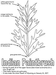 The Legend of the Indian Paintbrush Lesson Plan | Indian ...
