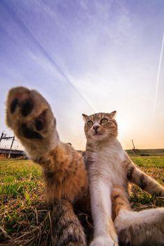 この写真家は「本当はネコなんじゃないか」と疑いがかかる、ものすごい瞬間を捉えた写真たち
