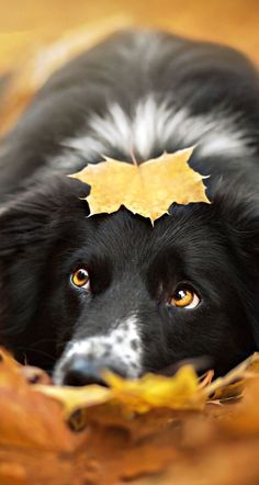 How Many Dog Breed Names Can You Identify? - AWW - - Is this A real dog breed or not? The post How Many Dog Breed Names Can You Identify? appeared first on Gag Dad. Cute Puppies, Cute Dogs, Dogs And Puppies, Doggies, Dog Breed Names, Dog Breeds, Dog Names, Beautiful Dogs, Animals Beautiful