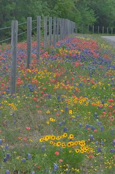 bordes de las calles ....Wild flowers by a fence.