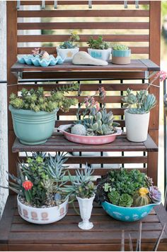Succulents in vintage pyrex - Very pretty, but PLEASE people, not in a perfectly shiny Balloons bowl :)