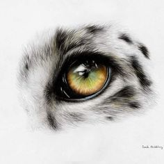 Finished my Snow leopard eye :) Polychromos colour pencils on mixed media paper…