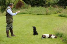 Fieldsports | Laying down the groundwork – From 8 weeks to 6 months | Gundog Training | Gundogs