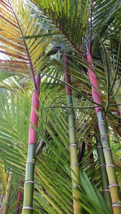 Hilo Zoo in Hilo, Hawaii :) RASTA BAMBOO Been here many, many times. Small but cute little zoo. Hawaiian Homes, Hawaiian Art, Hawaiian Flowers, Need A Vacation, Vacation Trips, Oahu Vacation, Vacations, Hawaii Hikes, Hawaii Travel Guide