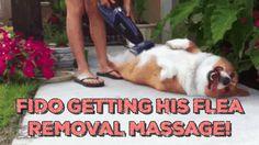 Positive Dog Training Animals Giff #9811 - Funny Dog Giffs| Funny Giffs| Dog Giffs
