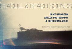 SEAGULL & BEACH SOUNDS La Paloma Blanche