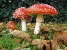 Eduboek paddenstoelen