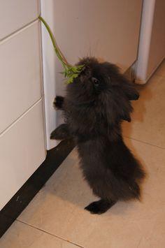 Some parsley got stuck? I'll help! I'll help! - July 26, 2012