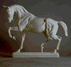 Cheval écorché (Isidore Bonheur),Lorenzi: mouleur statuaire