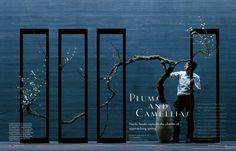 Plums and Camellias — Naoki Sasaki captures the charms
