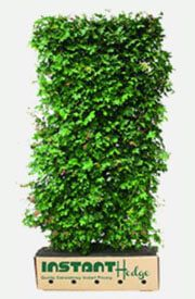 Best hedges: Buy Garden Hedges available for sale in United States. Pre-grown best hedging plants for privacy & screening in Deciduous & Evergreen Types. Shrubs For Privacy, Privacy Hedge, Privacy Landscaping, Backyard Privacy, Garden Landscaping, Green Giant Arborvitae, Emerald Green Arborvitae, Fast Growing Shrubs, Fast Growing Evergreens