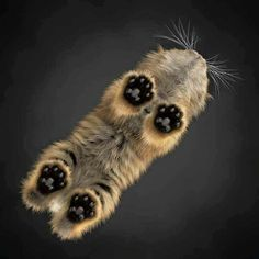 Cutest little itsy bitsy teensy weensy kitty toes....