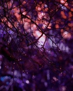 Fine Art Nature Photography - Twilight - purple magenta lilac lavender Sunset Sundown magical artistic woodland home decor