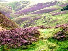 The beautiful moor.