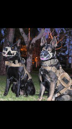 Tactical K9 Mask