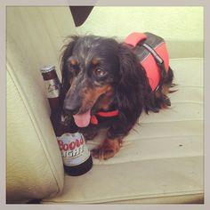 Dog days of summer #coorslight