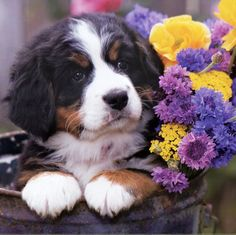 beauty of pup and flowers
