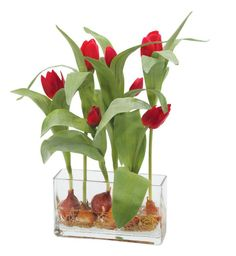 Natural Decorations, Inc. - Tulip | Rectangle Glass | Red