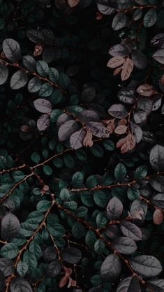 Black Wallpaper Lockscreen Rebel In A New Dress dark plants Wallpaper Tumblr Lockscreen, Iphone Wallpaper, Plant Wallpaper, Flower Wallpaper, Nature Wallpaper, Phone Backgrounds, Wallpaper Backgrounds, Most Beautiful Wallpaper, Lock Screen Wallpaper