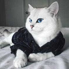 Apenas um gato com os olhos mais lindos do mundo