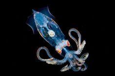 14-creatures-abyssales-sillustrent-dans-de-magnifiques-cliches6