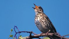 pictures of wild birds big and small | print page home birds and wildlife bird guide birds by name s song ...