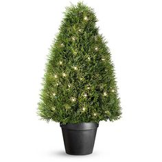 Pond Cypress Pre-Lit Artificial Topiary with 70 Clear Mini Lights ($190) ❤ liked on Polyvore featuring home, outdoors, garden decor, outdoor faux plants, faux plants, outdoor decor and watering pot