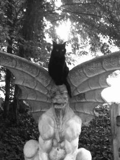 Black Cat sitting on gargoyle