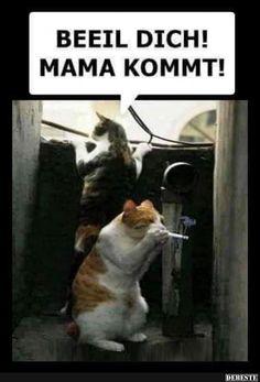 Beeil Dich! Mama kommt! | Lustige Bilder, Sprüche, Witze, echt lustig