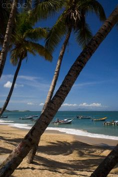 Palm trees and beach, Playa la Galera, Margarita Island, Venezuela