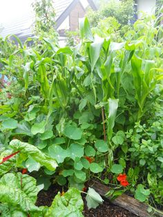 9 Tips for Increasing Your Yields | Permaculture Magazine