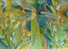 Jeannie Vodden (American)  watercolor  ~ The Dragonfly