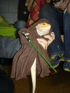 Bearded Dragon Costumes | Animals in Hats