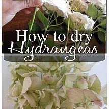 How To Dry Hydrangeas - Might need to do this and take some dried hydrangeas from Kinderhook to Sun Prairie. Our hydrangea bush was a gift from the PTA at the time of W's retirement. Garden Art, Garden Plants, Dream Garden, Diy Fleur, Hydrangea Garden, Hydrangea Bush, Hydrangea Wreath, Plantation, Dried Flowers
