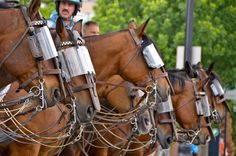 Glad to see police horses get protective gear too.