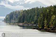 ALASKA LANDSCAPE 9 - digital high res color jpg file - fine art photography - tracey arm fjord shoreline spruce tree snow mountain mist